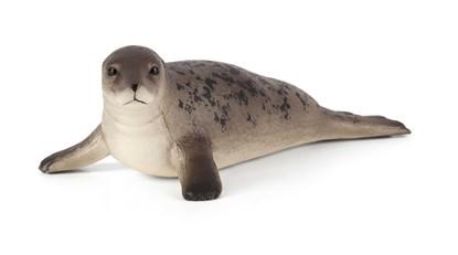 Billede af Animal Planet - Grå sæl