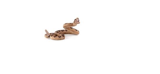 Billede af Animal Planet - Klapperslange
